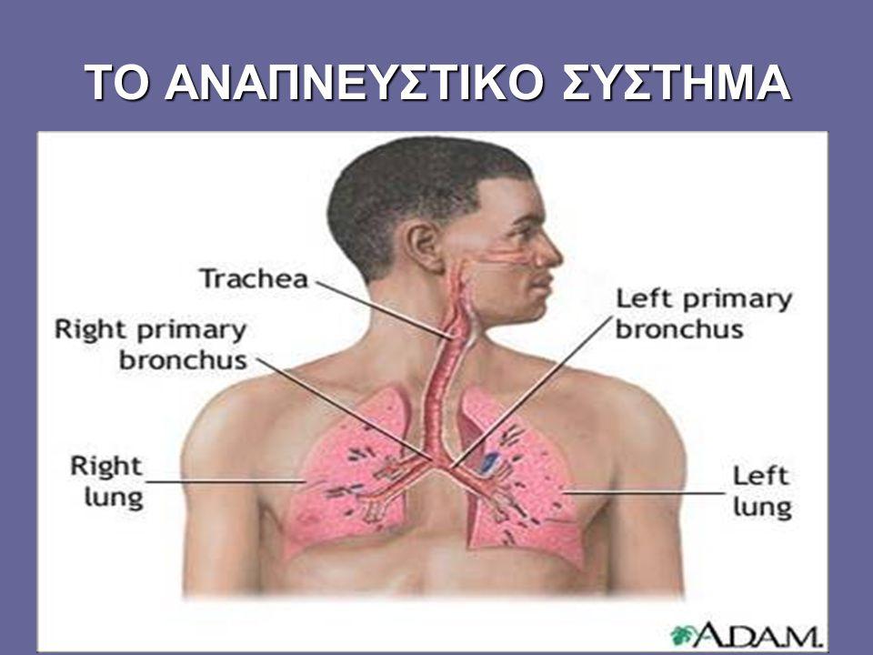 Η ΛΕΙΤΟΥΡΓΙΑ ΤΗΣ ΑΝΑΠΝΟΗΣ Η λειτουργία της αναπνοής είναι πολύ σημαντική για τον άνθρωπο.