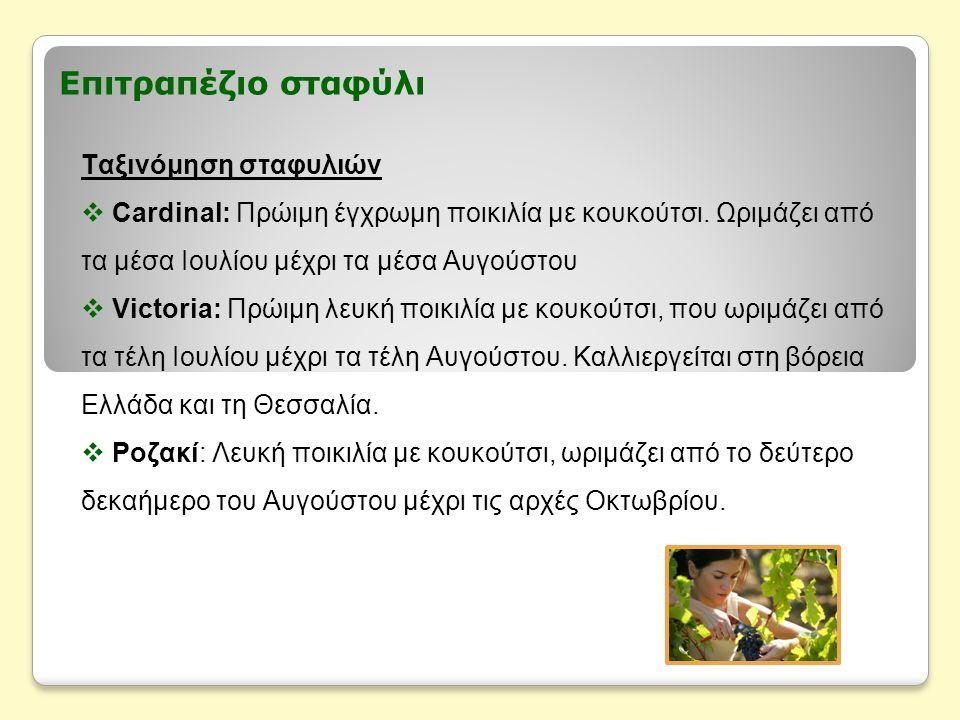 Επιτραπέζιο σταφύλι Ταξινόμηση σταφυλιών  Σουλτανίνα: Λευκή ποικιλία χωρίς κουκούτσι, που ωριμάζει από τα μέσα Αυγούστου μέχρι τα μέσα Νοεμβρίου.
