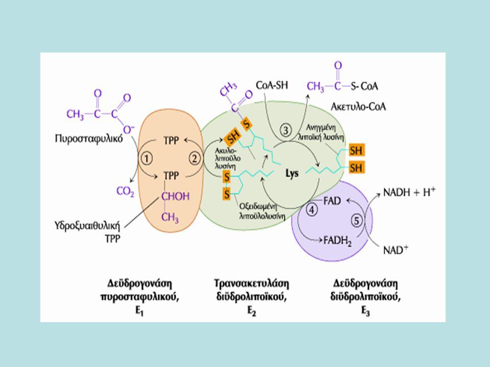 Κλινικές επιπτώσεις Μεταλλάξεις στα γονίδια των υπομονάδων του συμπλόκου της αφυδρογονάσης του πυροσταφυλικού,ΡDΗ, οδηγούν σε ανεπάρκεια της ΡDΗ, νευρολογικές διαταραχέςΜεταλλάξεις στα γονίδια των υπομονάδων του συμπλόκου της αφυδρογονάσης του πυροσταφυλικού,ΡDΗ, οδηγούν σε ανεπάρκεια της ΡDΗ, νευρολογικές διαταραχές Ανεπάρκεια θειαμίνηςΑνεπάρκεια θειαμίνης -Ζώα με ανεπάρκεια θειαμίνης αδυνατούν να οξειδώσουν το πυροσταφυλικό –αυτό έχει ιδιαίτερη σημασία για τον εγκέφαλο που αποκτά ενέργεια αποκλειστικά από την αερόβια οξείδωση της γλυκόζης σε μια οδό που αναγκαστικά περιλαμβάνει οξείδωση του πυροσταφυλικού - η νόσος Beri-beri οφείλεται σε ανεπάρκεια θειαμίνης, χαρακτηρίζεται από δυσλειτουργία του νευρικού συστήματος.