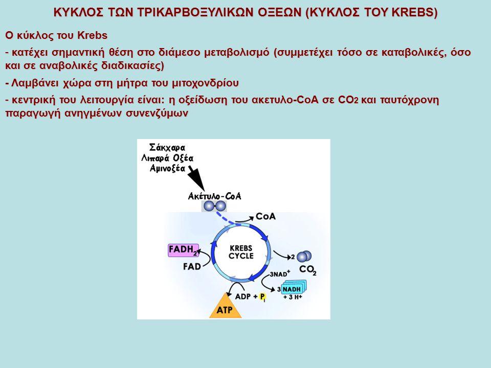 ΚΥΚΛΟΣ ΤΩΝ ΤΡΙΚΑΡΒΟΞΥΛΙΚΩΝ ΟΞΕΩΝ (ΚΥΚΛΟΣ ΤΟΥ KREBS) -Ταυτόχρονα συμμετέχει σε ένα αριθμό σημαντικών συνθετικών αντιδράσεων βιοσύνθεση λιπαρών οξέων (κιτρικό) βιοσύνθεση αίμης (ηλέκτρυλοCoA) βιοσύνθεση αμινοξέων (α-κετογλουταρικό και οξαλοξικό) γλυκονεογένεση (οξαλοξικό) ΔΕΝ είναι ένας κλειστός κύκλος αλλά ένας κύκλος όπου έχουμε διαρκή είσοδο και απομάκρυνση ουσιών ανάλογα με τις ανάγκες του οργανισμού - Οι μεταβολίτες του κύκλου που απομακρύνονται αναπληρώνονται μέσω των αντιδράσεων αναπλήρωσης: αντιδράσεων αναπλήρωσης: μετατροπή πυροσταφυλικού σε οξαλοξικό μετατροπή πυροσταφυλικού σε οξαλοξικό μετατροπή του γλουταμικου σε α-κετογλουταρικό μετατροπή του γλουταμικου σε α-κετογλουταρικό μετατροπή του ασπαρτικού σε οξαλοξικό μετατροπή του ασπαρτικού σε οξαλοξικό σχηματισμό ηλεκτρυλοCoA κατά τον καταβολισμό των αμινοξέων βαλίνη, σχηματισμό ηλεκτρυλοCoA κατά τον καταβολισμό των αμινοξέων βαλίνη, θρεονίνη, ισολευκίνη και μεθειονίνη θρεονίνη, ισολευκίνη και μεθειονίνη