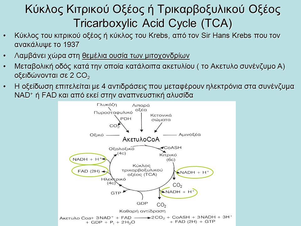 Παραγωγή ακετυλο-CoA Το πυροσταφυλικό οξύ, προϊόν της γλυκόλυσης οξειδώνεται σε ακετυλο-CoA από το σύμπλοκο της δεϋδρογονάσης του πυροσταφυλικούΤο πυροσταφυλικό οξύ, προϊόν της γλυκόλυσης οξειδώνεται σε ακετυλο-CoA από το σύμπλοκο της δεϋδρογονάσης του πυροσταφυλικού Η αντίδραση είναι οξειδωτική αποκαρβοξυλίωση, κατά την οποία η καρβοξυλική ομάδα από το πυροσταφυλικό ελευθερώνεται σε ένα μόριο CO 2 και οι υπόλοιποι άνθρακες σχηματίζουν το ακετυλο-CoAΗ αντίδραση είναι οξειδωτική αποκαρβοξυλίωση, κατά την οποία η καρβοξυλική ομάδα από το πυροσταφυλικό ελευθερώνεται σε ένα μόριο CO 2 και οι υπόλοιποι άνθρακες σχηματίζουν το ακετυλο-CoA 3 διαφορετικά ένζυμα (Ε1, Ε2, Ε3) καταλύουν την αντίδραση3 διαφορετικά ένζυμα (Ε1, Ε2, Ε3) καταλύουν την αντίδραση 5 συνένζυμα συμμετέχουν στην αντίδραση, πυροφωσφορική θειαμίνη (ΤΡΡ), FAD, CοΑ, ΝΑD+, λιποϊκό οξύ5 συνένζυμα συμμετέχουν στην αντίδραση, πυροφωσφορική θειαμίνη (ΤΡΡ), FAD, CοΑ, ΝΑD+, λιποϊκό οξύ