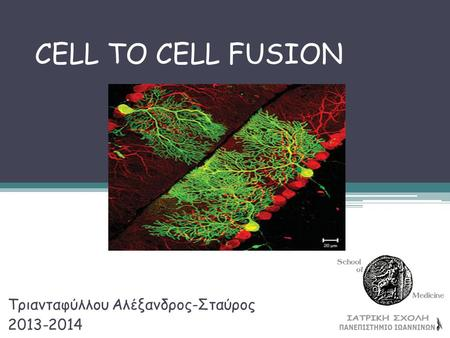 CELL TO CELL FUSION Τριανταφύλλου Αλέξανδρος-Σταύρος 2013-2014.