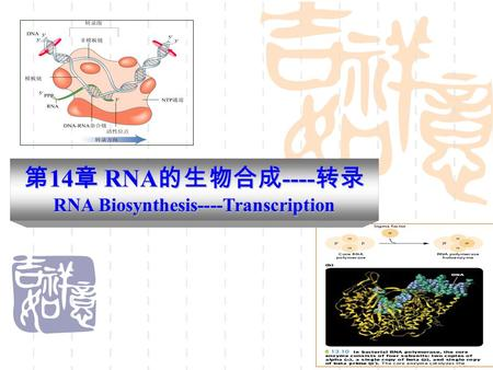 第 14 章 RNA 的生物合成 ---- 转录 RNA Biosynthesis----Transcription.