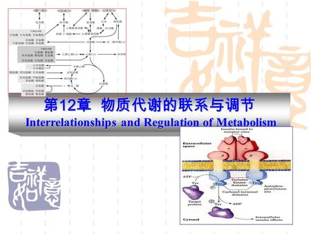 第 12 章 物质代谢的联系与调节 Interrelationships and Regulation of Metabolism.