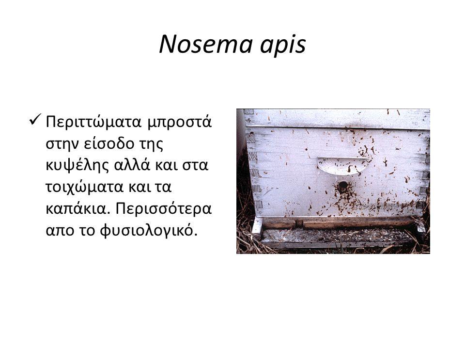 Nosema apis  Σημαντικός αριθμός νεκρών μελισσών μπροστά στην είσοδο της κυψέλης