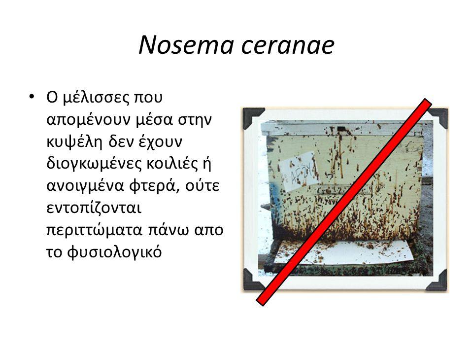 Nosema ceranae • Παρά την έλλειψη χαρακτηριστικών μακροσκοπικών συμπτωμάτων, ο καλός μελισσοκόμος μπορεί να υποπτευθεί την ύπαρξη της νόσου εάν παρατηρήσει το μελίσσι του προσεκτικά
