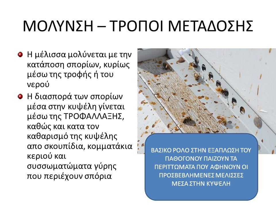 ΒΙΟΛΟΓΙΚΟΣ ΚΥΚΛΟΣ ΠΑΘΟΓΟΝΟΥ • Τα σπόρια με τη κατάποση περνούν στο στομάχι των μελισσών • Με τη βοήθεια των γαστρικών υγρών βλαστάνουν