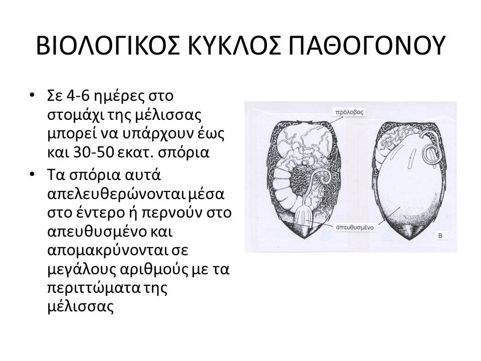 2 ΔΙΑΦΟΡΕΤΙΚΑ ΠΑΘΟΓΟΝΑ Nosema apis • Το βασικό παθογόνο της ασθένειας που γνωρίζαμε έως το 1995 • Αναγνωρίστηκε στις αρχές του 20 ου αι.