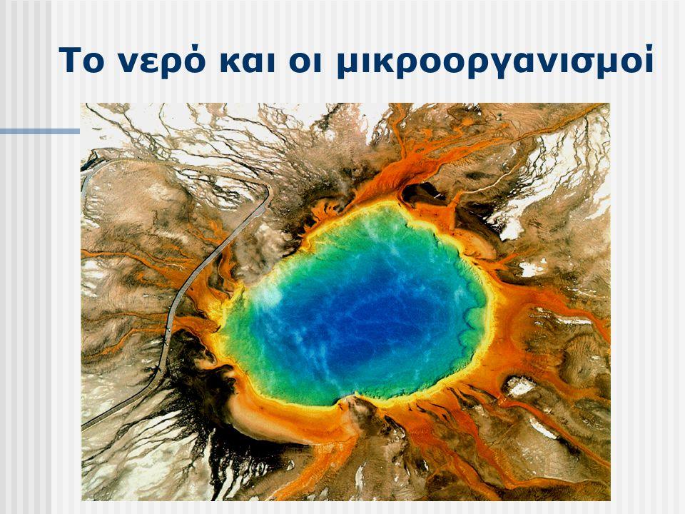 Το νερό ως δεξαμενή παθογόνων μικροοργανισμών  Μικροοργανισμοί όπως Escherichia coli, Pseudomonas aeruginosa κλπ ανευρίσκονται στο ασφαλές πόσιμο νερό (όρια ασφάλειας: <1 coliform/100 mL)  Ορισμένοι μικροοργανισμοί μπορούν να πολλαπλασιάζονται στο πόσιμο νερό  Δεκάδες βιβλιογραφικές αναφορές συσχετίζουν την εμφάνιση νοσοκομειακών λοιμώξεων με μικροοργανισμούς που προήλθαν από το νερό του δικτύου (Trautmann M.