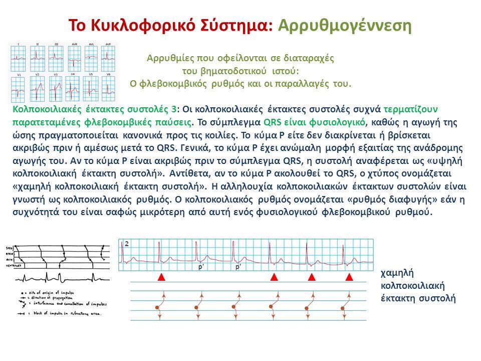 Το Κυκλοφορικό Σύστημα: Αρρυθμογέννεση Κοιλιακές έκτακτες συστολές 1: Προστατεύουν την καρδιά από την ασυστολία σε περίπτωση κολποκοιλιακού αποκλεισμού (είτε μόνιμου είτε παροδικού).