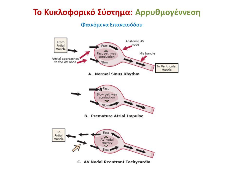 Το Κυκλοφορικό Σύστημα: Αρρυθμογέννεση Bypass tracts: A: atrioventricular (Kent); B: atrio-His(James); C: Intranodal; D: nodoventricular (Mahaim).