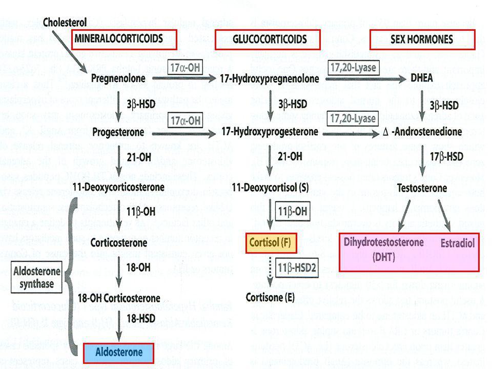 11β-HSD2 * * 11β-Hydroxy Steroid Dehydrogenase2 SAME Syndrome Glycyrrhizic acid Carvenoxolone Congenital Adrenal Hyperplasia CHIMERIC GENE GRA