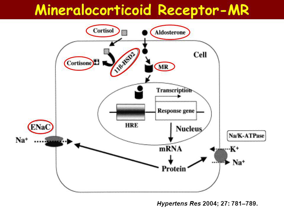 It has been subsequently shown that under normal conditions most epithelial MRs are occupied (~ 90%), but not activated by normal levels of endogenous glucocorticoids.