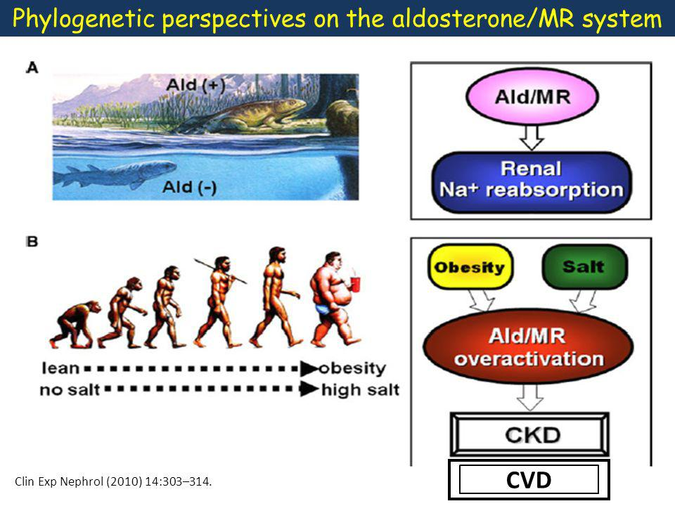 High levels of aldosterone in response to dietary salt restriction, promotes renal sodium conservation, but has no cardiovascular consequences.