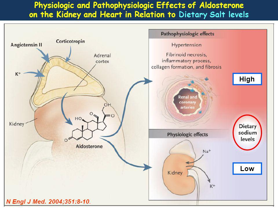 In primary aldosteronism and chronic high salt intake, aldosterone levels are inappropriate high for sodium status and aldosterone is clearly a cardiovascular risk factor.