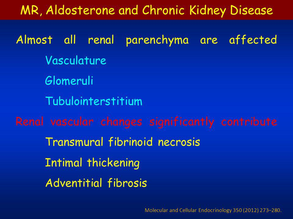 Aldosterone causes glomerular injury, especially in podocytes that serve as the key filtration barrier in the glomeruli.