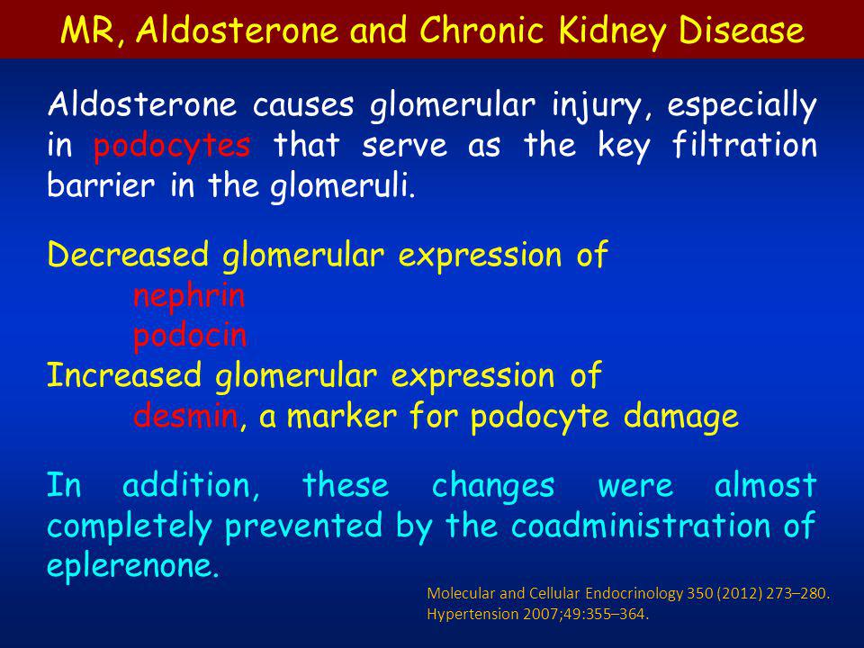 Involvement of podocyte damage in the renal dysfunction of aldosterone/salt-treated rats Hypertension 2007;49:355–364.