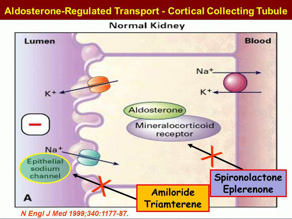 Sodium Channels and Transporters Regulation of Na reabsorption depends on the number of channels inserted in the cell membrane.