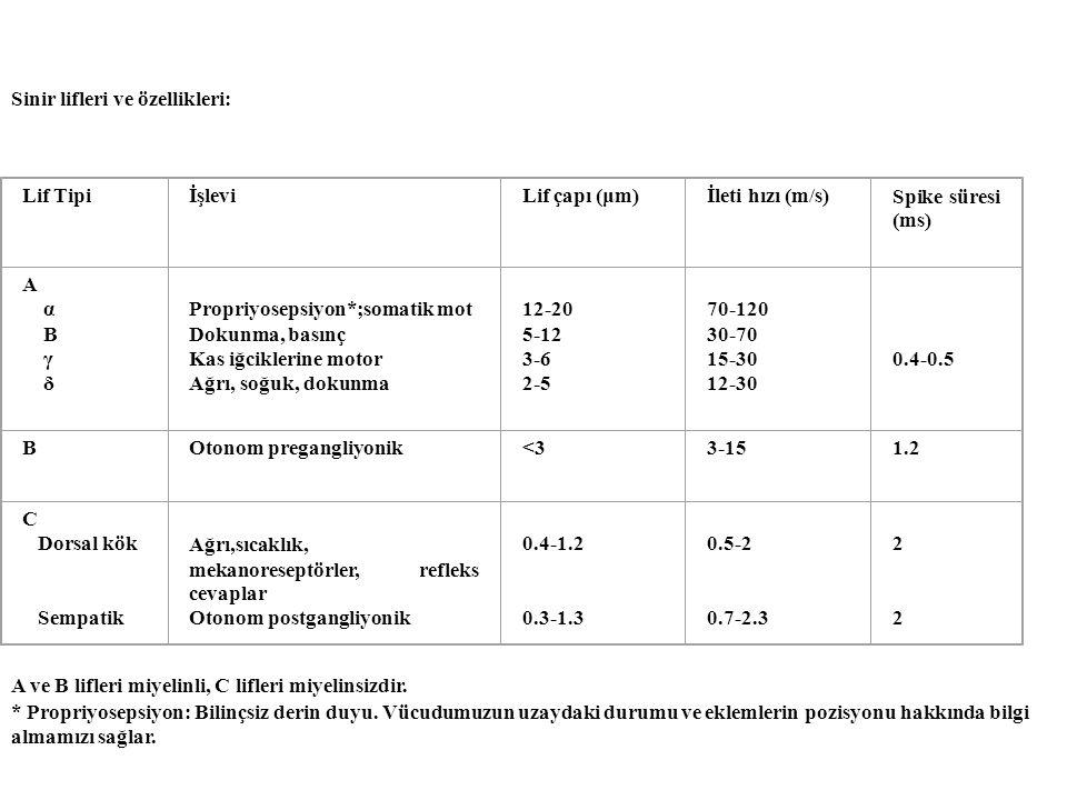 A, B ve C liflerinin çeşitli ajanlara duyarlılıkları: DuyarlılıkEn duyarlıOrtaEn az duyarlı HipoksiBAC BasınçABC Lokal anestetik CBA