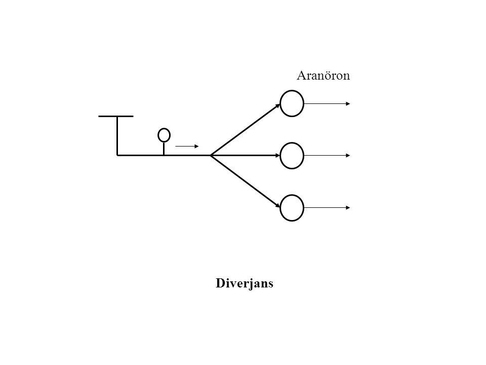 Motor Nöron Konverjans