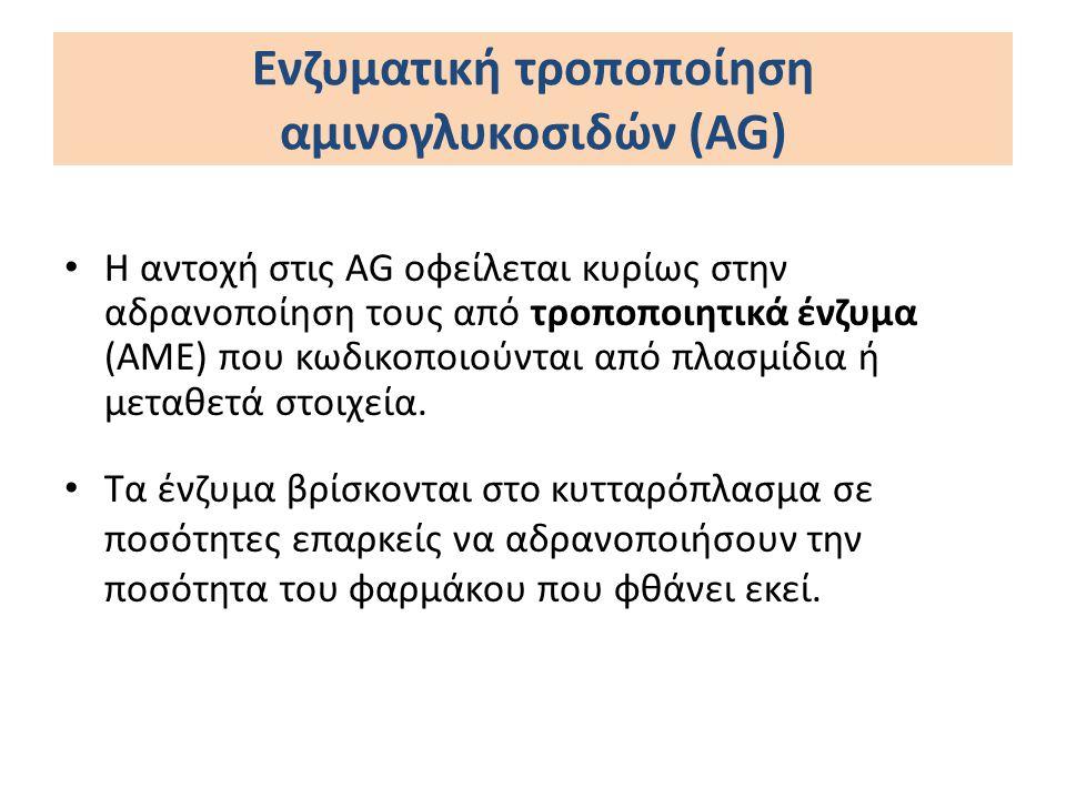 Υπάρχουν τρεις κλάσεις τροποιητικών ενζύμων Ακετυλοτρανσφεράσες (AACs) Αδενυλοτρανσφεράσες (ANTs) Φώσφοτρανσφεράσες (APHs) Ενζυματική τροποποίηση αμινογλυκοσιδών
