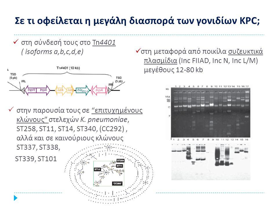 Σύνδεση με επιτυχημένους κλώνους στελεχών E.coli, που συνήθως συνδέονται με παραγωγή CTX-M και ανιχνεύονται στην κοινότητα όπως ο ST131, ST410, ST405 Mushtaq S et al, JAC 2011 Μεταφορά από ποικίλα συζευκτικά πλασμίδια (Inc A/C, Inc F, Inc L/M ) Kumarasamy et al, Lancet Infect Dis 2010 Υψηλότερη συχνότητα σύζευξης παρατηρείται σε θερμοκρασία 30 ο C συγκριτικά με 27 ή 37 ο C Walsh et al, Lancet Infect Dis, 2011 Πολυκλωνική διασπορά των NDM-1 Μετάδοση στο περιβάλλον Μέση θερμοκρασία στην Ινδία 30 o C για 7 μήνες (Απρ-Οκτ) Μετάδοση στο περιβάλλον Μέση θερμοκρασία στην Ινδία 30 o C για 7 μήνες (Απρ-Οκτ)