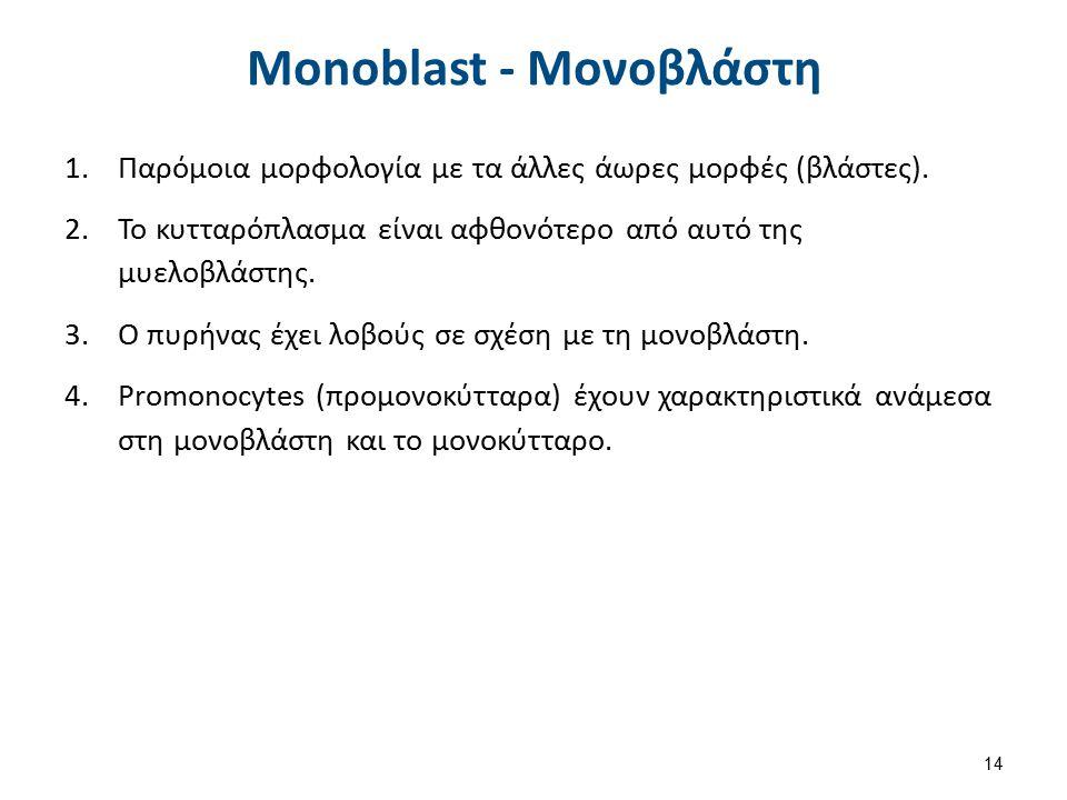Monocyte - Μονοκύτταρο 1.Διάμετρος 12-20μm.2.Μεγάλο σχήμα.