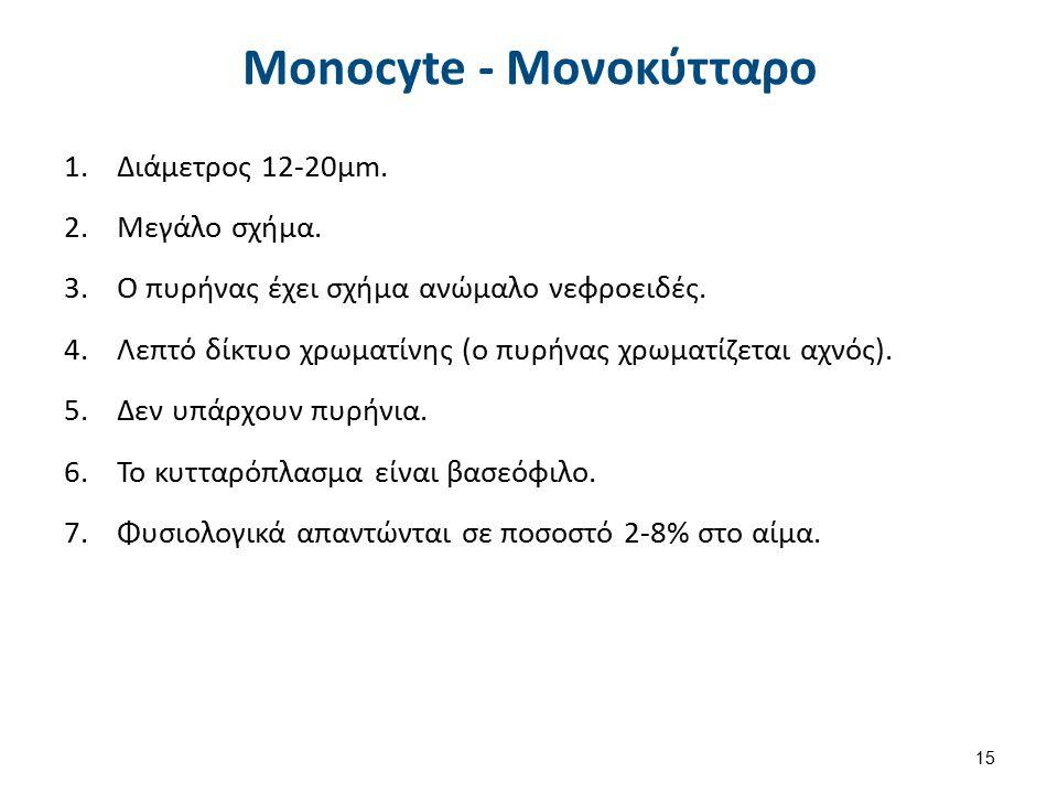 Monocyte – Μονοκύτταρο ή Μεγάλο Μονοπύρηνο 1.Απαντούν χημειοτακτικά στην παρουσία νεκρωμένου υλικού, φλεγμονής και εισβολέων-μικροοργανισμών.