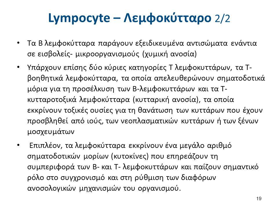 Λευκοκυττάρωση - Λευκοπενία Λευκοκυττάρωση: Αύξηση του απόλυτου αριθμού των λευκοκυττάρων (White Blood Cells) πάνω από 11.000/μl.