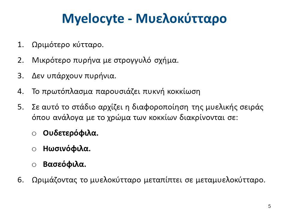 Metamyelocyte - Μεταμυελοκύτταρο 1.Διάμετρος 12-16μm.
