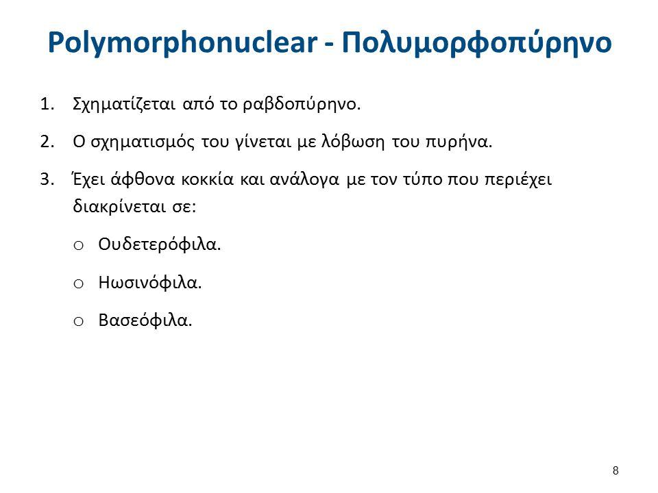 Neutrophil Ουδετερόφιλο Πολυμορφοπύρηνο 1/3 Διάμετρος 10-15μm.