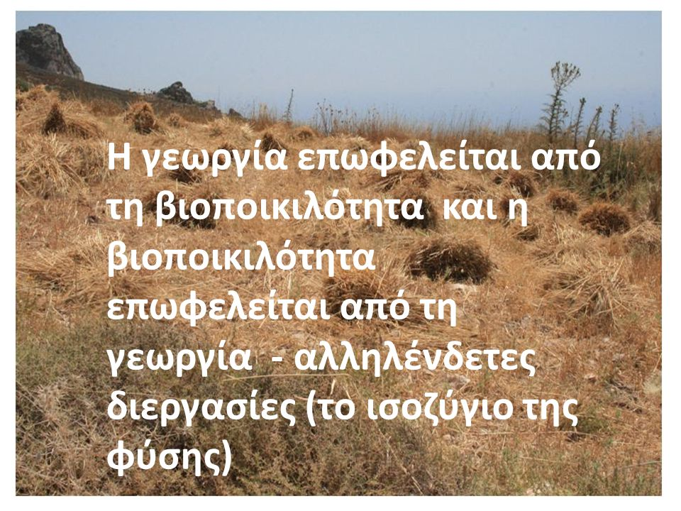 Οικονομικό όφελος Τροφική Αλυσίδα (έλεγχος πληθυσμών) Παράσιτα ελέγχονται από φυσικούς εχθρούς Γεωργία και όφελος – γενετική ποικιλία Επικονιαστές (μέλισσες, πεταλούδες, κολεόπτερα, πουλιά νυχτερίδες
