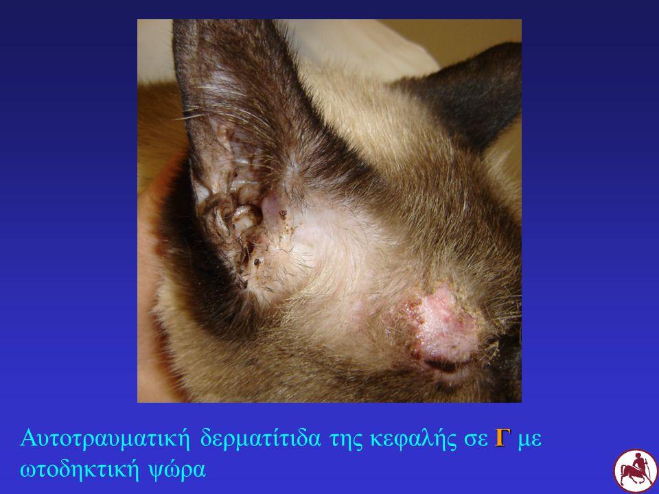 ΔΙΑΓΝΩΣΗ Παρασιτολογική εξέταση έξω ακουστικού πόρου βαμβακοφόρος στειλεός ή/και έκπλυση με παραφινέλαιο Ψευδώς αρνητικά: λίγα ακάρεα, απομάκρυνση από τον έξω ακουστικό πόρο λόγω της φλεγμονής Σ Γ Να γίνεται σε κάθε περιστατικό ωτίτιδας στο Σ και τη Γ Παρασιτολογική εξέταση δέρματος Θεραπευτική δοκιμή Γ Γ με ωτίτιδα + αρνητική παρασιτολογική εξέταση + μη διαπίστωση άλλου αιτίου ωτίτιδας Σ Γ Σ με χρόνια ή υποτροπιάζουσα ωτίτιδα + αρνητική παρασιτολογική εξέταση + μη διαπίστωση άλλου αιτίου ωτίτιδας + επαφή με Γ Ωτοσκόπηση: μπορεί να φανούν τα ακάρεα (κινούνται)