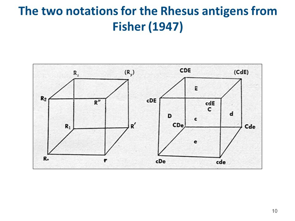 The two notations for the Rhesus antigens from Fisher (1947) 10