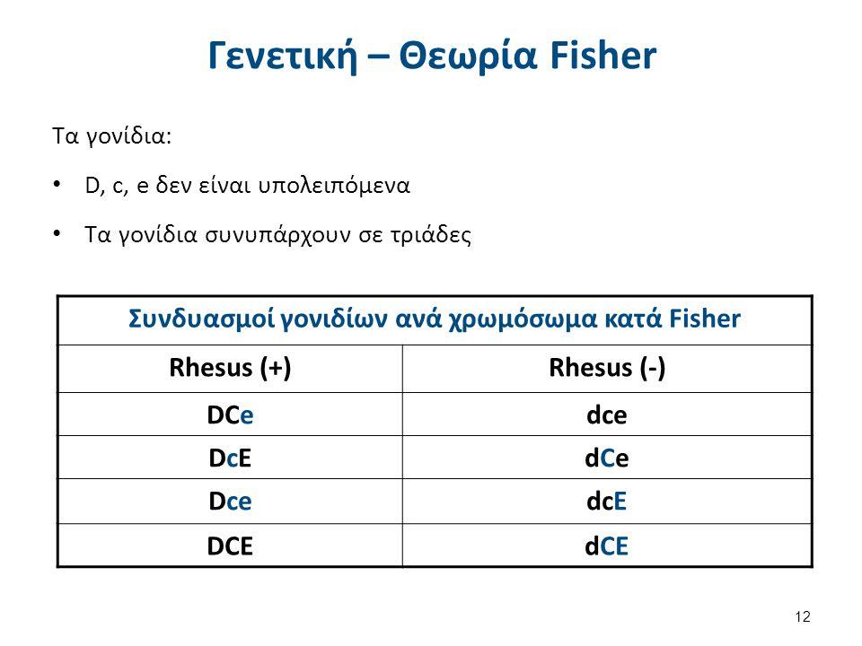 Συνδυασμοί γονιδίων ανά χρωμόσωμα κατά Fisher Rhesus (+)Rhesus (-) DCedce DcEDcEdCedCe DcedcE DCEdCE Γενετική – Θεωρία Fisher Τα γονίδια: D, c, e δεν είναι υπολειπόμενα Τα γονίδια συνυπάρχουν σε τριάδες 12