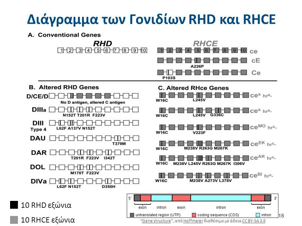 10 RHD εξώνια 10 RHCE εξώνια Διάγραμμα των Γονιδίων RHD και RHCE 18 Gene structure , από Hoffmeier διαθέσιμο με άδεια CC BY-SA 3.0Gene structureHoffmeierCC BY-SA 3.0