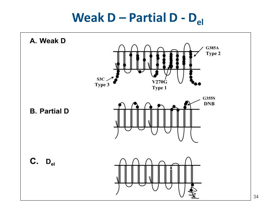 Weak D – Partial D - D el 34