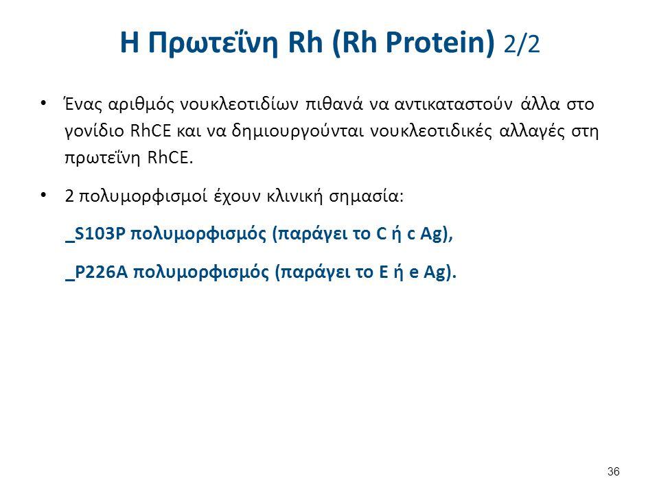 H Πρωτεΐνη Rh (Rh Protein) 2/2 Ένας αριθμός νουκλεοτιδίων πιθανά να αντικαταστούν άλλα στο γονίδιο RhCE και να δημιουργούνται νουκλεοτιδικές αλλαγές στη πρωτεΐνη RhCE.