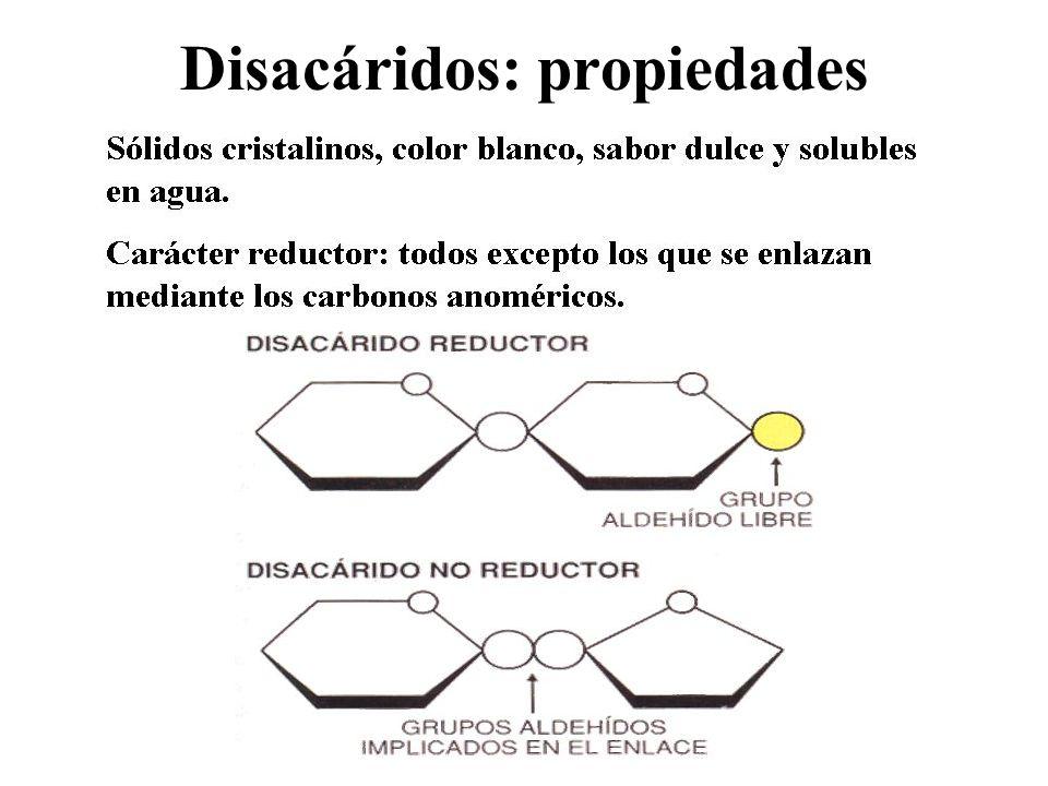 Disacáridos: propiedades