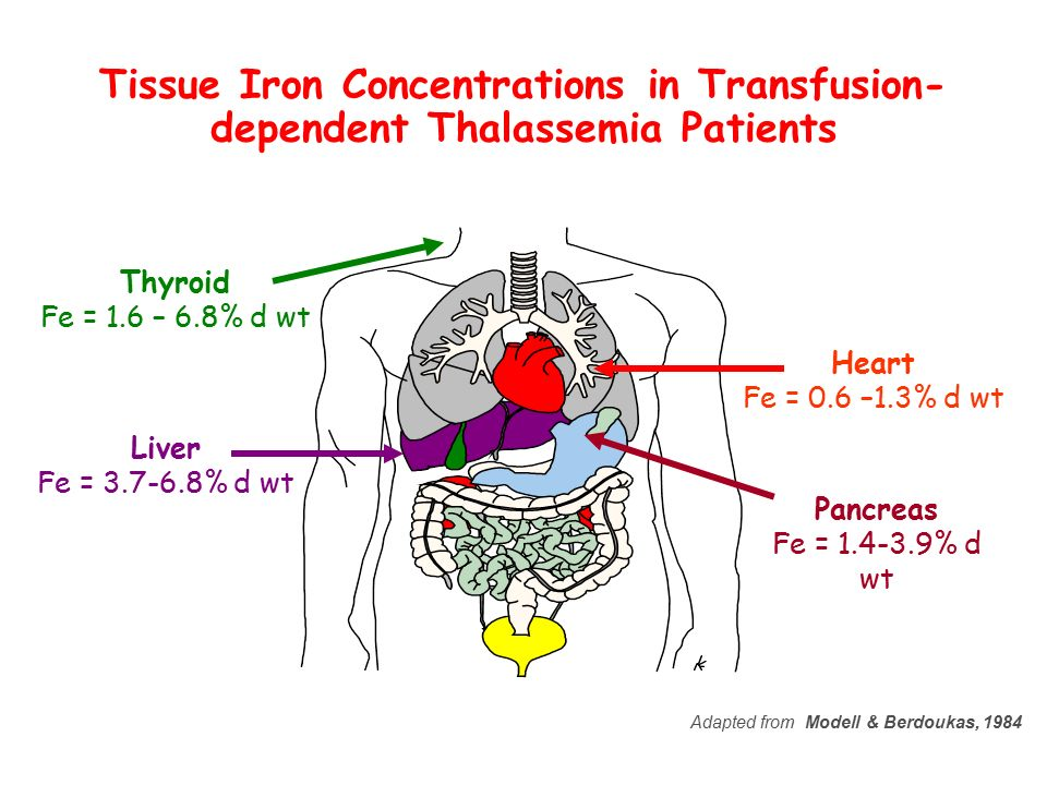 Tissue Iron Concentrations in Transfusion-dependent Thalassemia Patients
