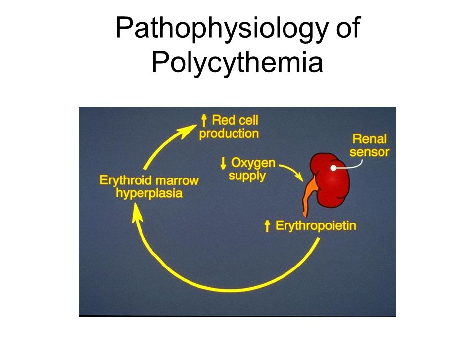 Pathophysiology of Polycythemia