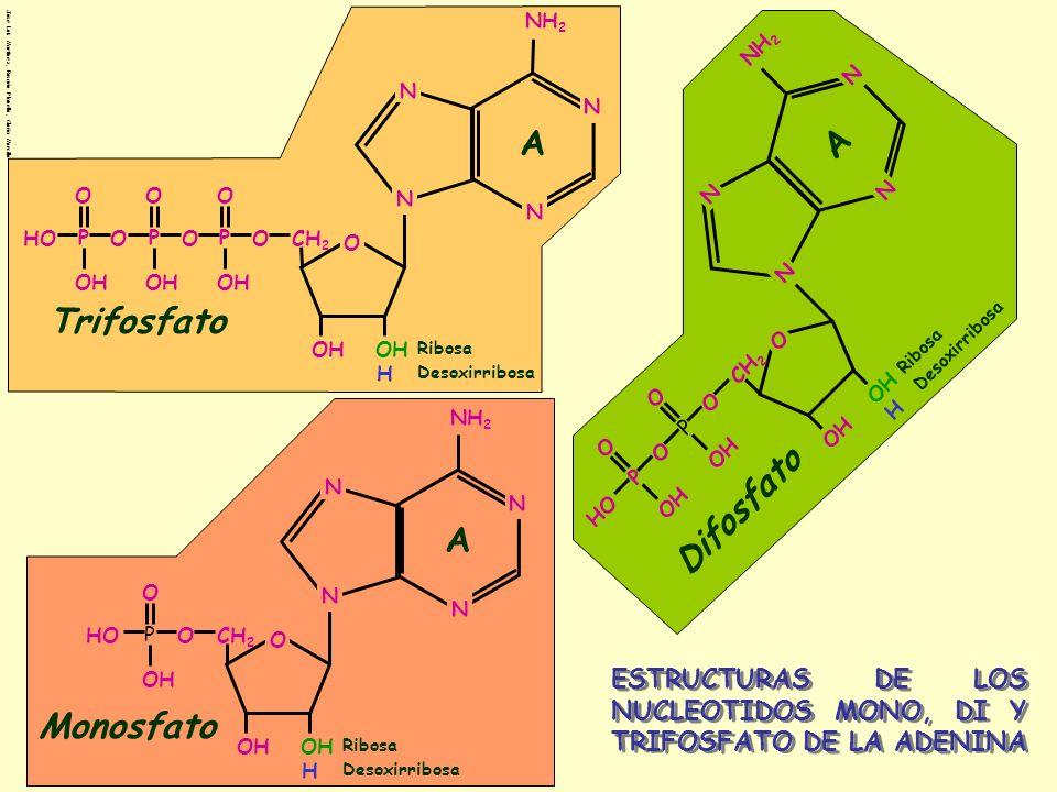 A A Trifosfato Difosfato A Monosfato