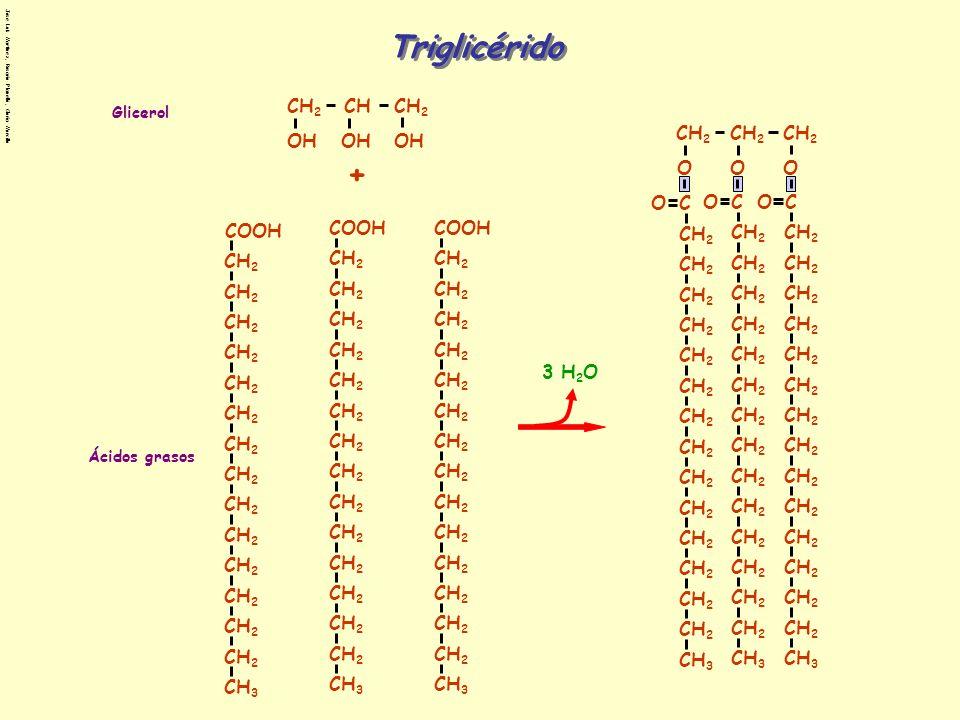 Triglicérido 3 H2O CH2 O C CH3 COOH OH CH + Glicerol Ácidos grasos