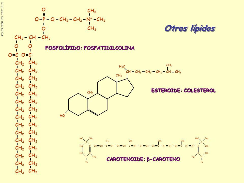 Otros lípidos CH2 O CH C CH3 P N+ FOSFOLÍPIDO: FOSFATIDILCOLINA