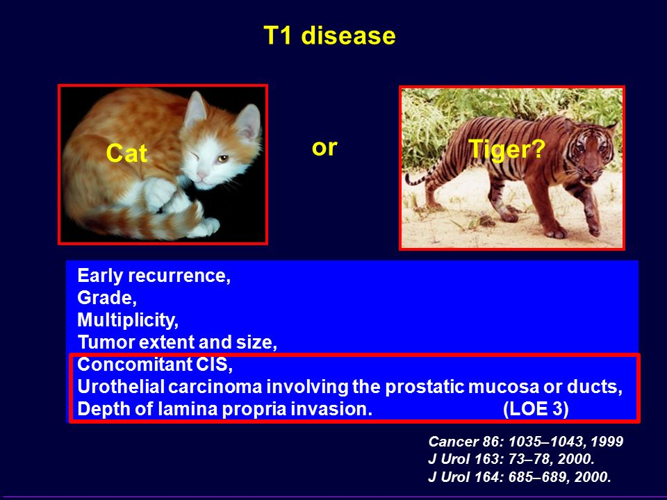 T1 disease or Tiger Cat Early recurrence, Grade, Multiplicity,