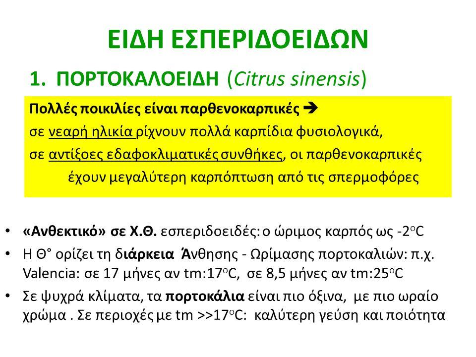 ΕΙΔΗ ΕΣΠΕΡΙΔΟΕΙΔΩΝ ΠΟΡΤΟΚΑΛΟΕΙΔΗ (Citrus sinensis)