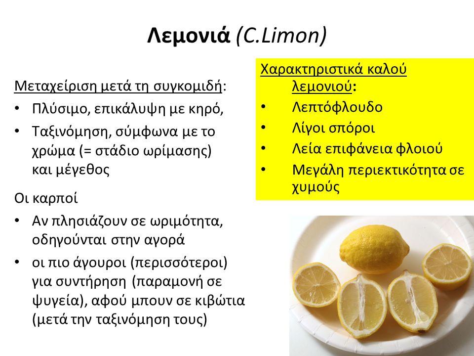 Λεμονιά (C.Limon) Χαρακτηριστικά καλού λεμονιού: