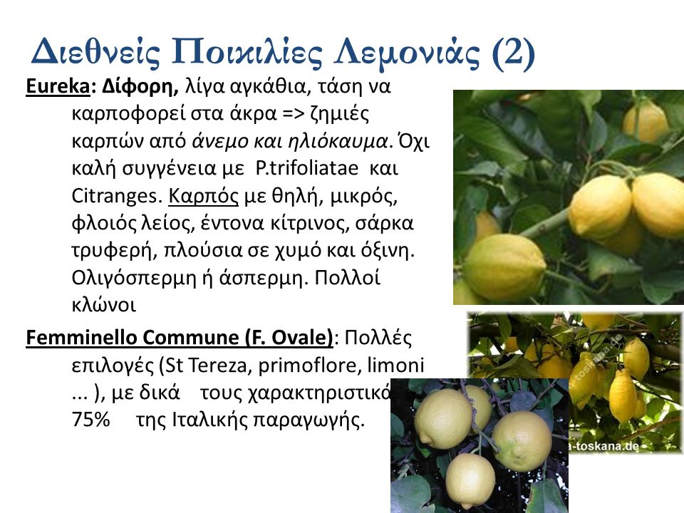 Διεθνείς Ποικιλίες Λεμονιάς (2)