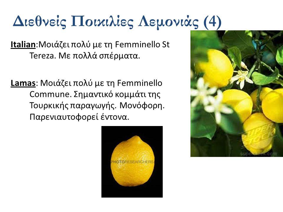 Διεθνείς Ποικιλίες Λεμονιάς (4)