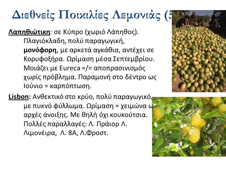 Διεθνείς Ποικιλίες Λεμονιάς (5)